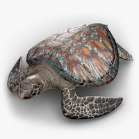 sea turtle 3D models
