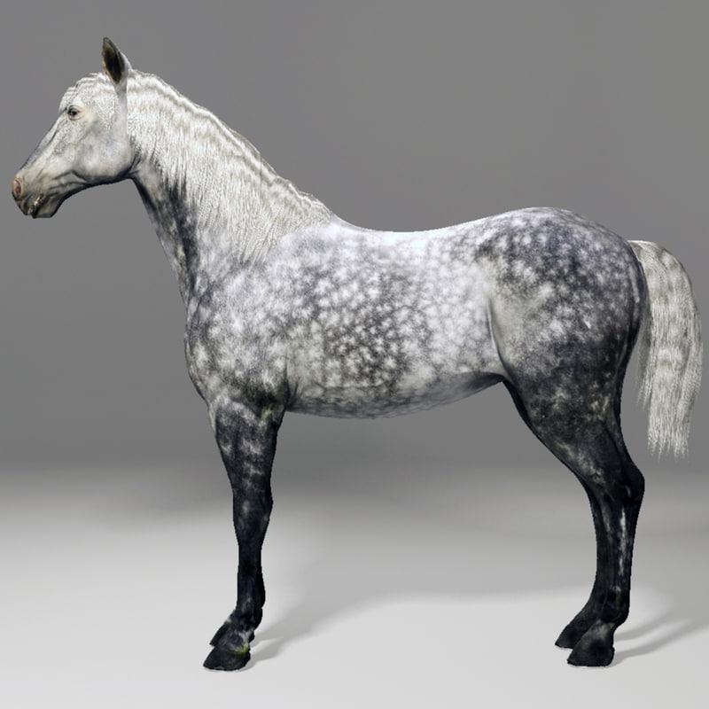 Horse_00010.jpg