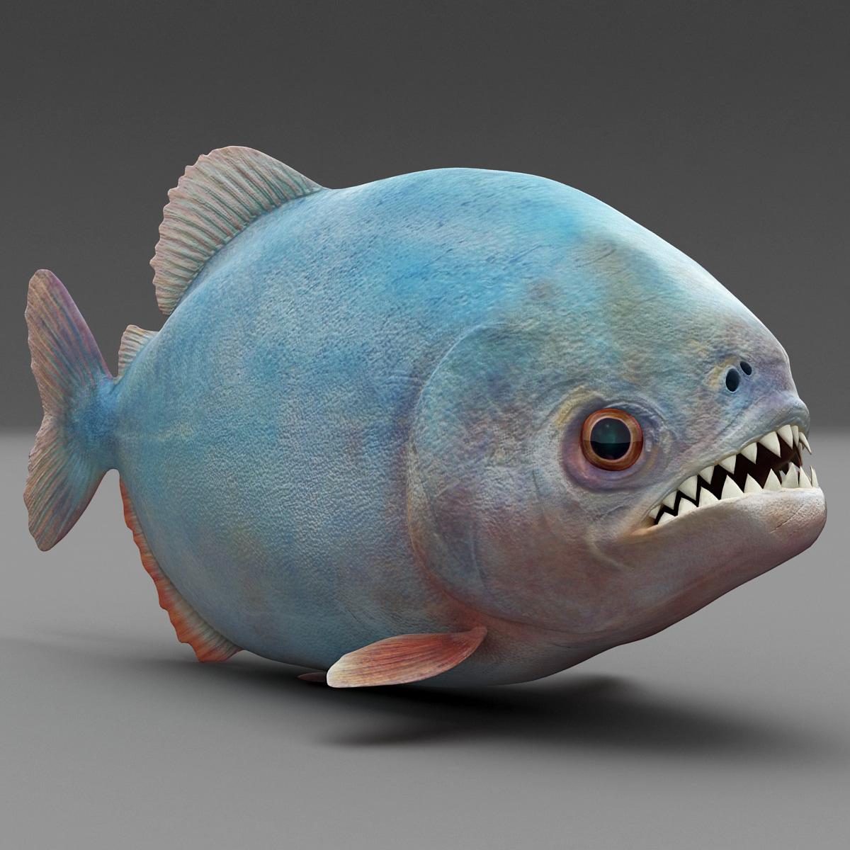 piranha_0001.jpg