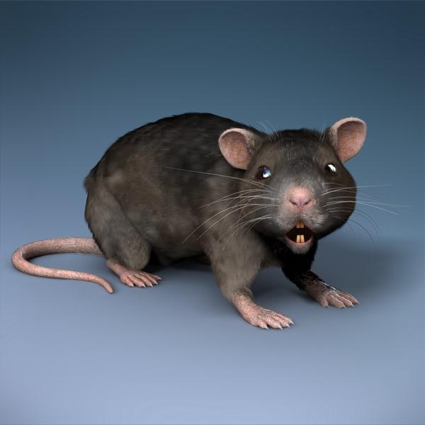 Rat - Rigged 3D Models
