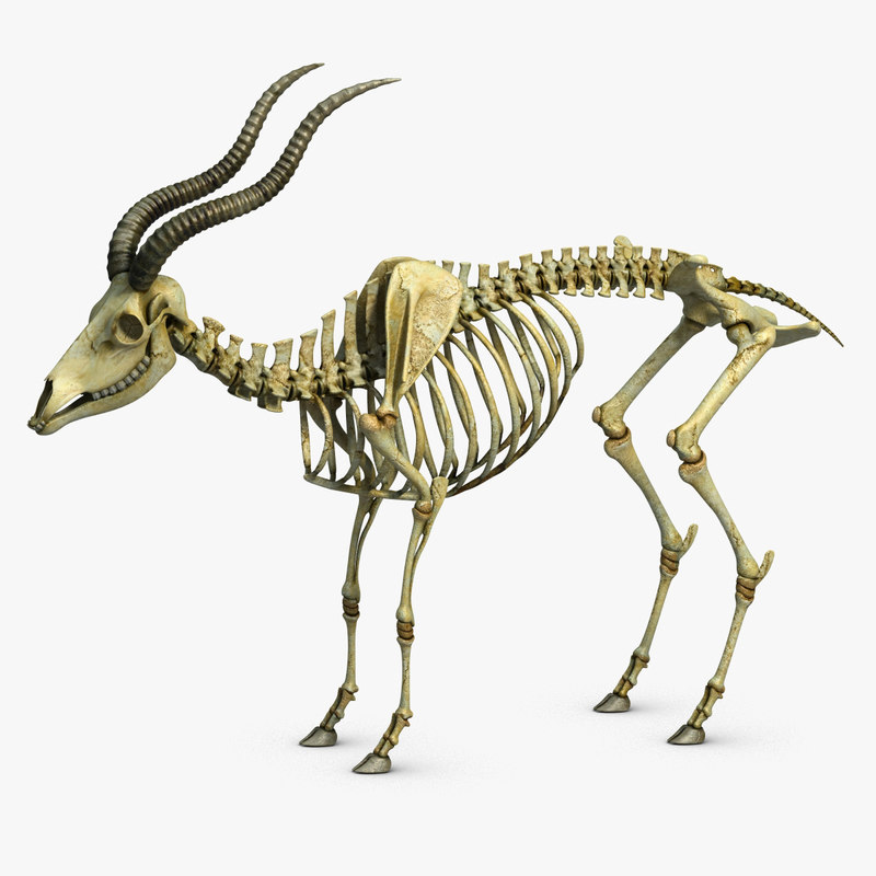 GoatSkeleton_CheckMate-1.jpg