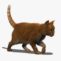 cat 3d models