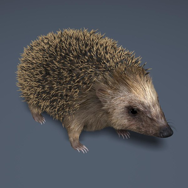 Hedgehog (FUR) 3D Models