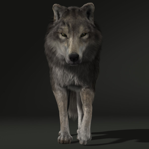 Wolf (2) (FUR) (ANIMATED) 3D Models