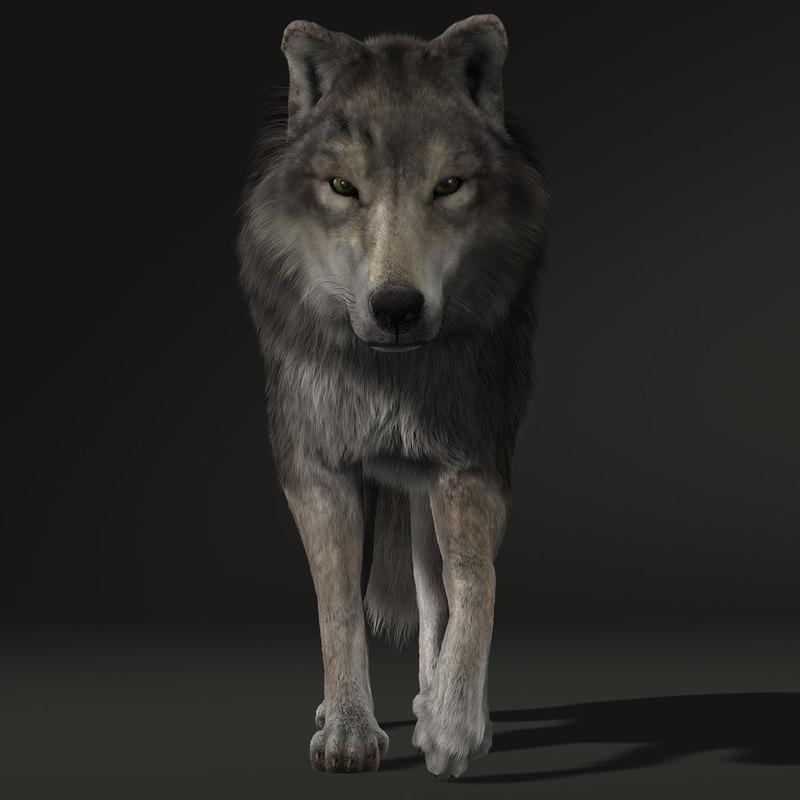 Wolf (2) (FUR) (ANIMATED)
