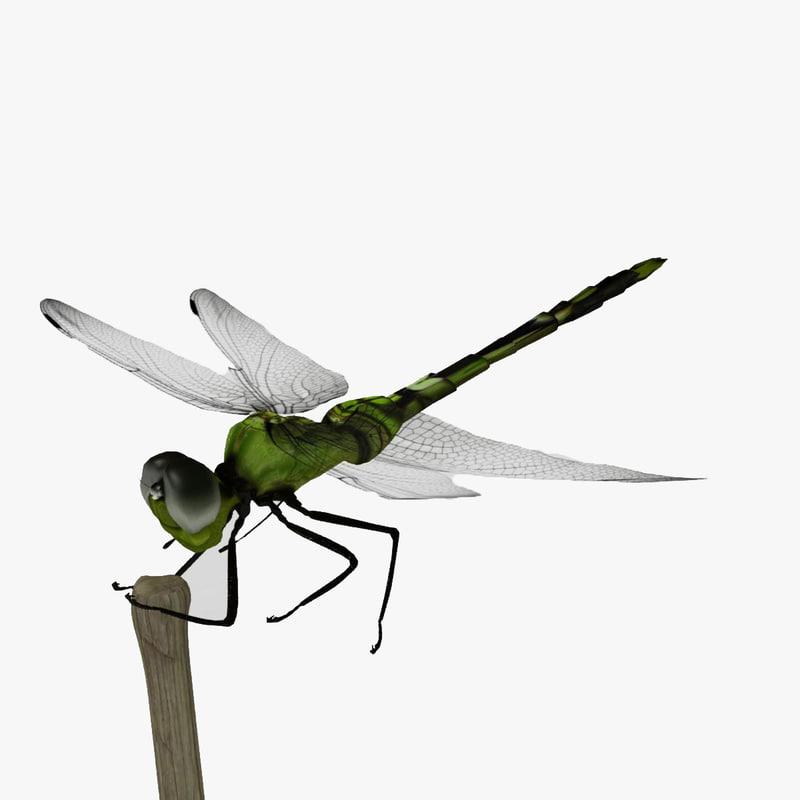 Dragonfly_render_00.jpg