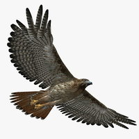 bird 3d models