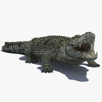 reptile 3D models