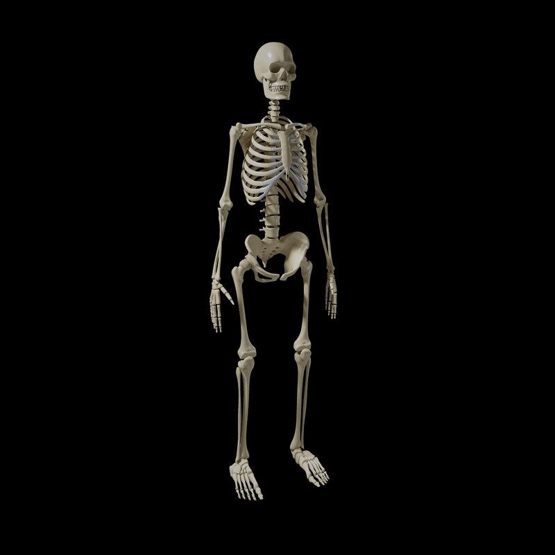 skeletonPreview06.jpg