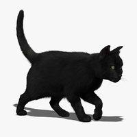housecat 3D models