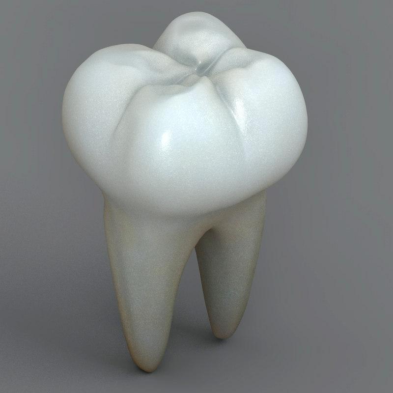 Realistic Human Teeth
