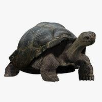 tortoise 3D models