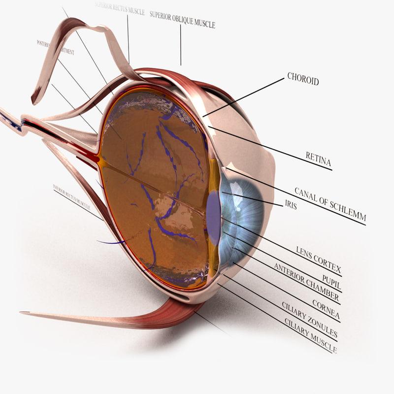 eye-section-first.jpg