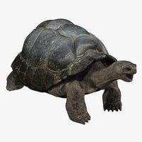 turtle 3d models