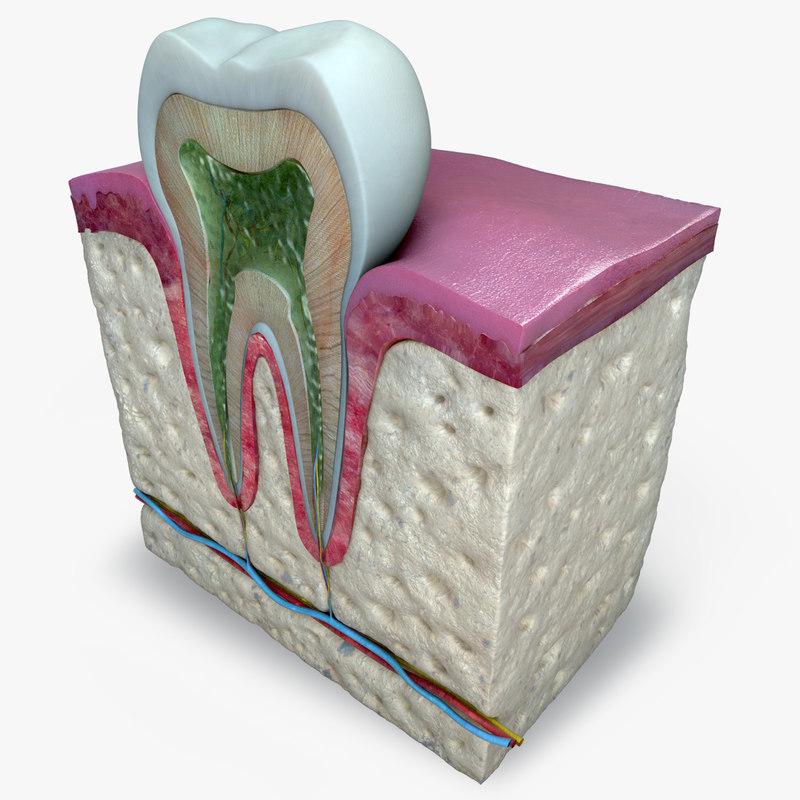 Teeth_Diagram_01b.jpg