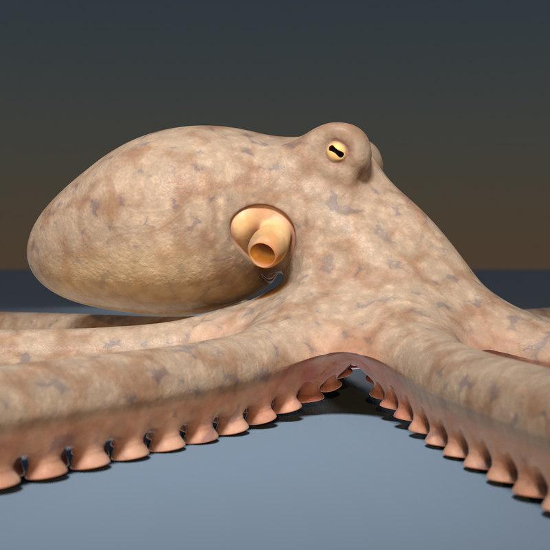 Octopus-001b.jpg