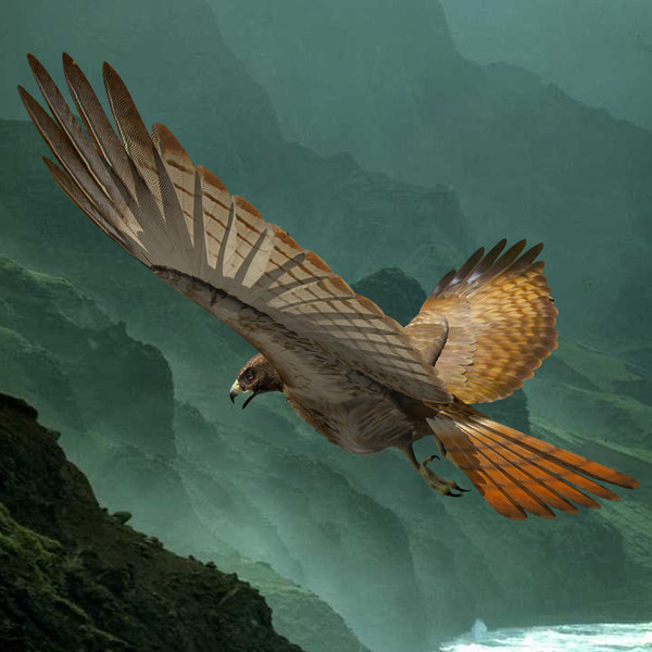 Red Tailed Hawk 3D Models
