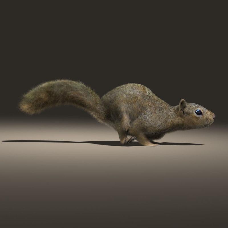 Squirrel (ANIMATED) (FUR)