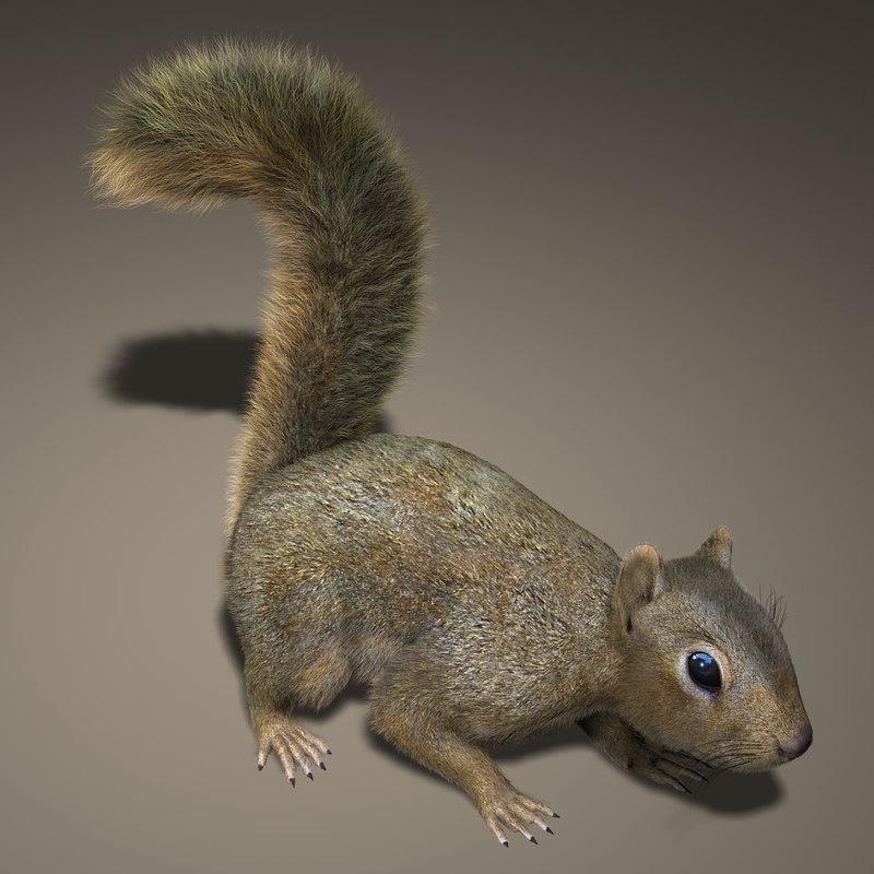 Squirrel (RIGGED) (FUR)
