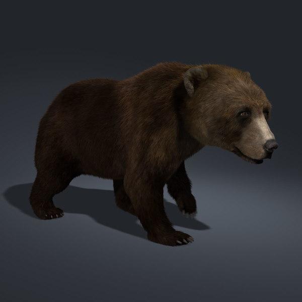 Brown Bear (ANIMATED) (FUR) 3D Models