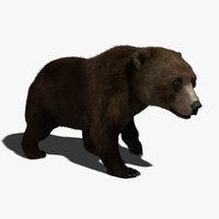 bear 3d models