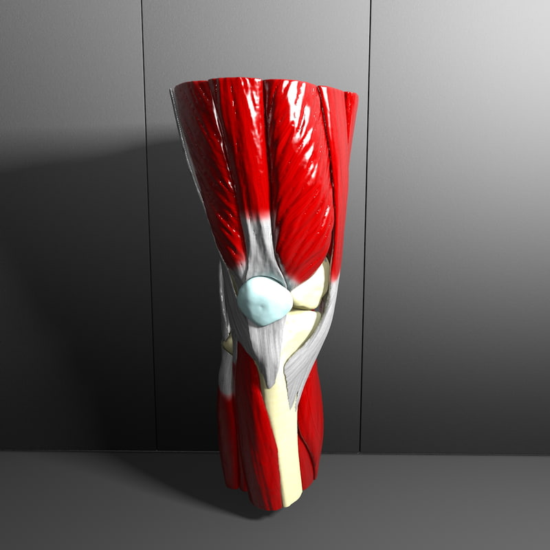 Perfect Knee render 002_0000.jpg