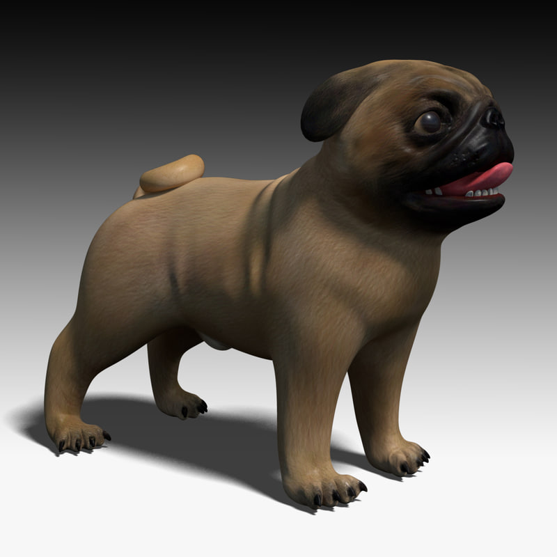 pug animal dog 3d model salimbeni.jpg