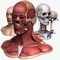 male head 3D models