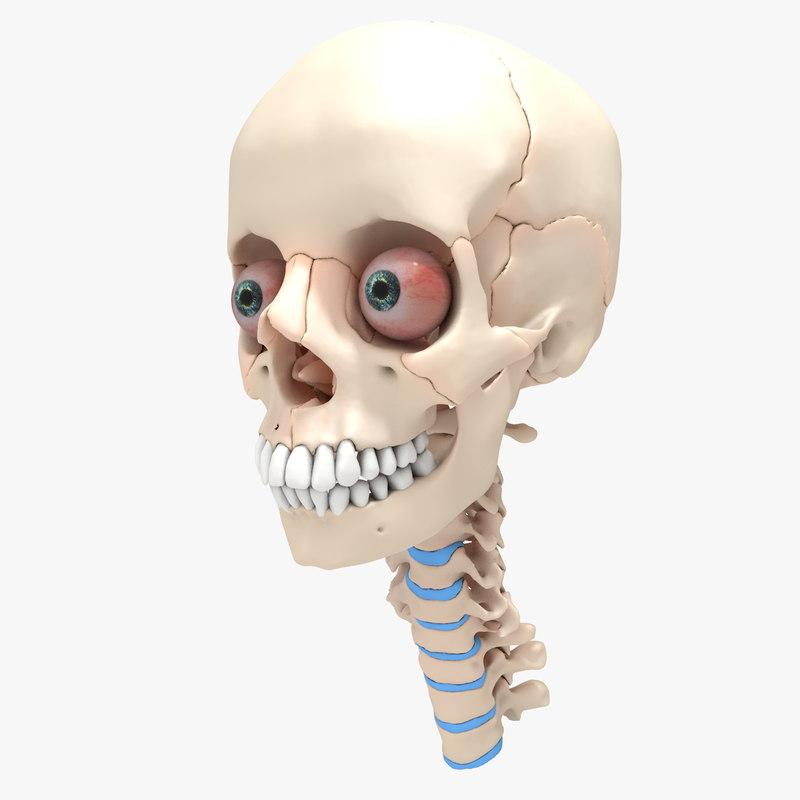 Skull 000.jpg