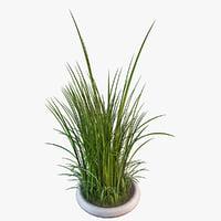 grasses 3D models