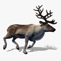 Reindeer 3D models