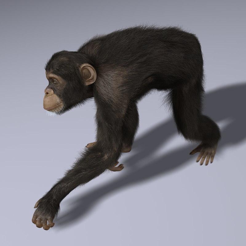 Chimp (2) (ANIMATED) (FUR)