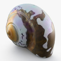 sea snail shell 3D models