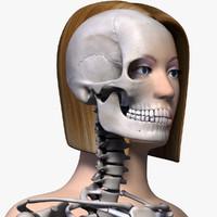 human skeleton 3d models