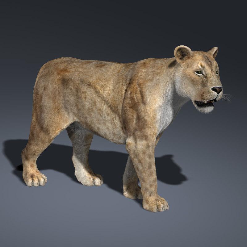 Lioness (2) (RIGGED) (FUR)