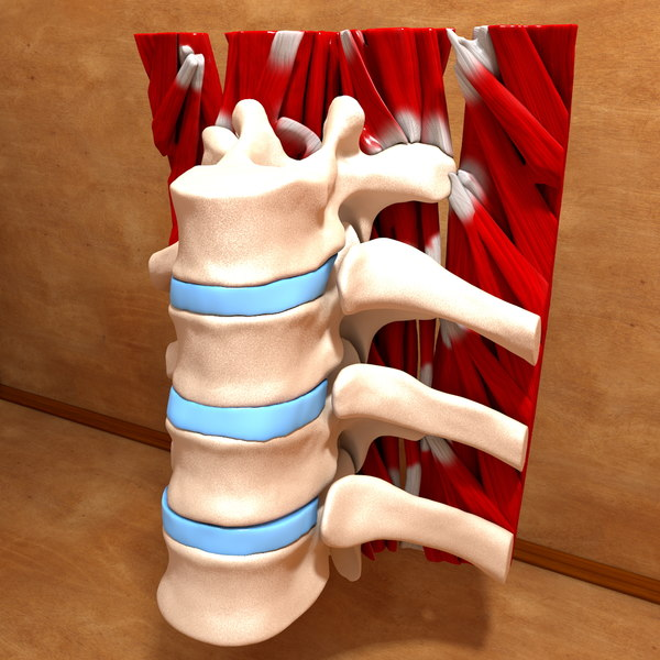 Ultimate Human Spine (Part of) 3D Models