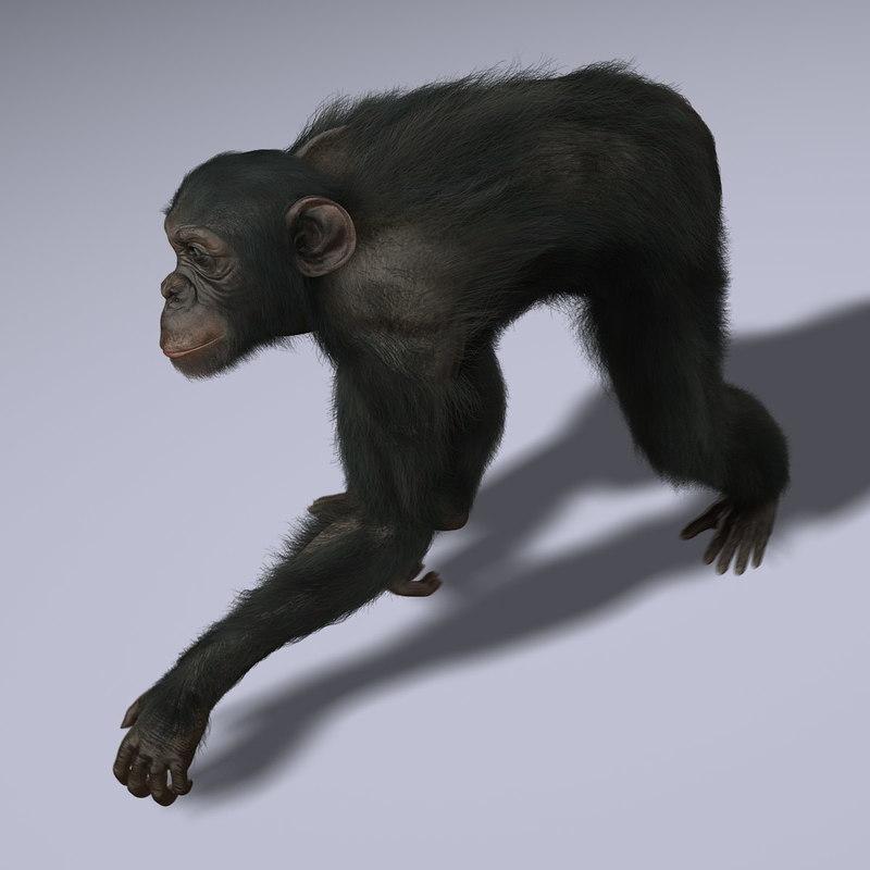 Chimp (ANIMATED) (FUR)
