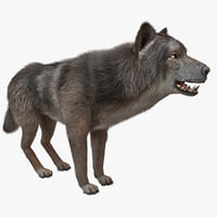wolf 3d models
