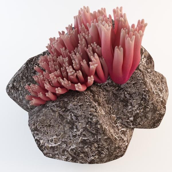 Coral Mushroom Ramaria Araiospora 3D Models