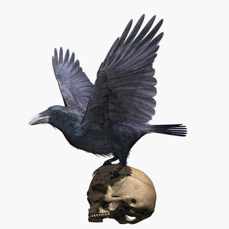Raven-SIg-Silhouette-010290.jpg