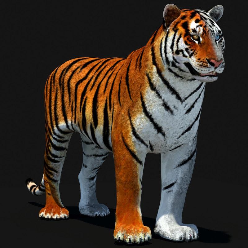 Tiger-000.jpg