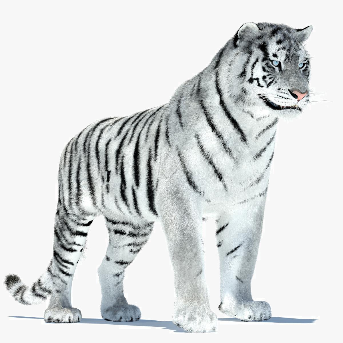 Tiger-00.jpg