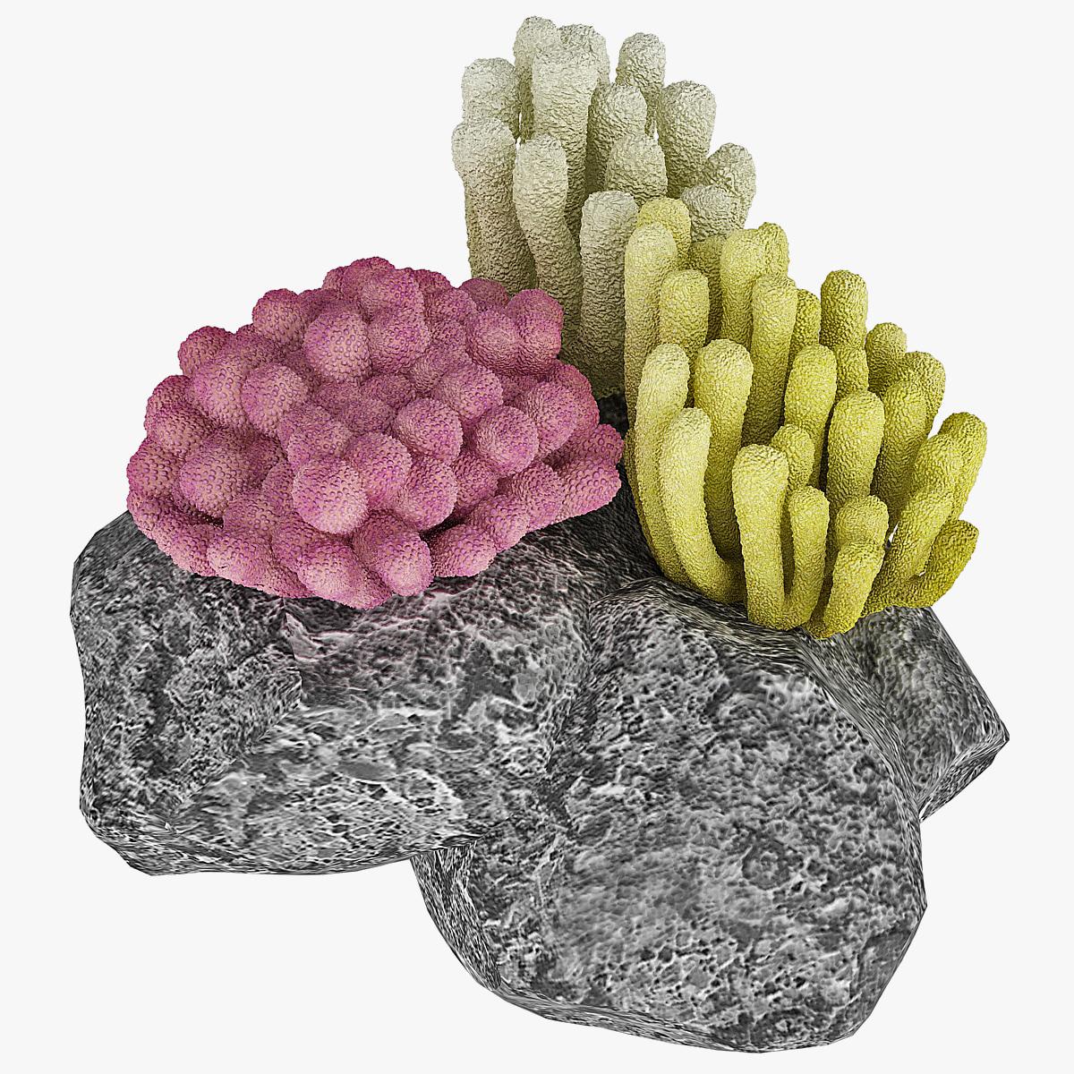 130826_Corals_Set_000.jpg