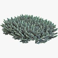 Coral Reef 3D models