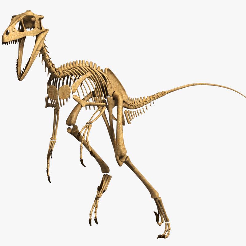 Dromaeosaurus_0.jpg
