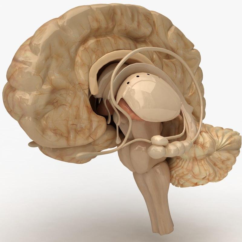 Brain_00.jpg