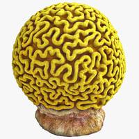 brain coral 3D models