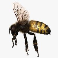 bee 3D models