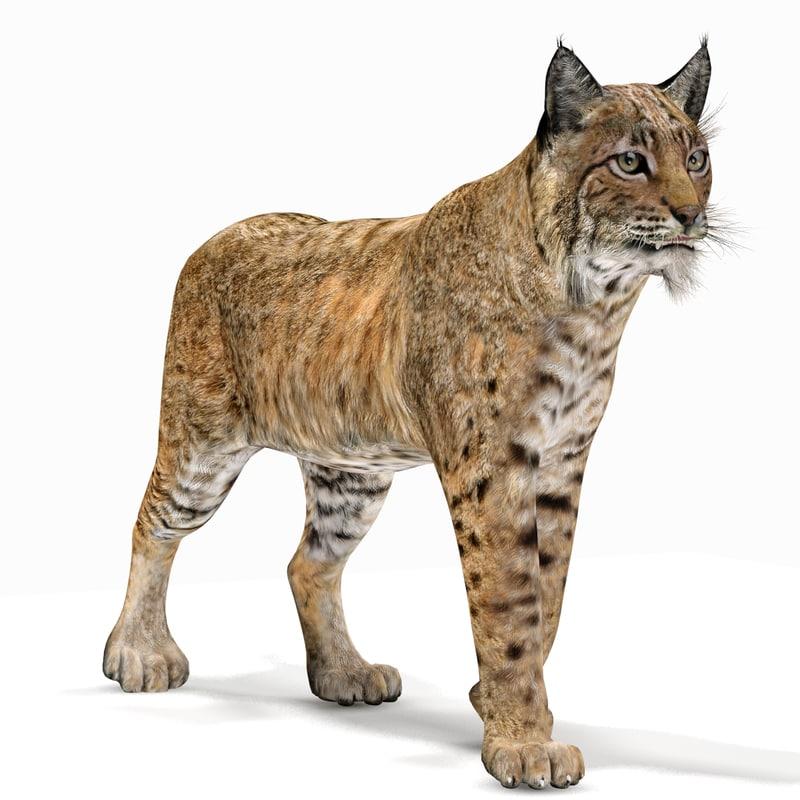 Bobcat-02.jpg