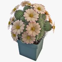 cactus 3d models